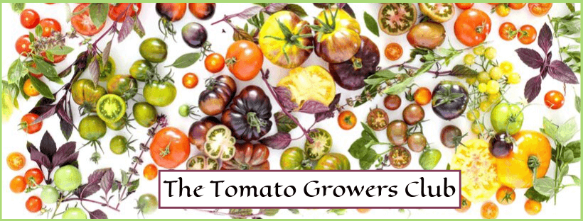 The Tomato Growers Club